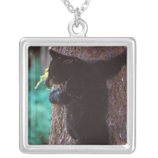 black bear, Ursus americanus, spring cub in a Silver Plated Necklace