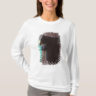 black bear, Ursus americanus, spring cub in a T-Shirt