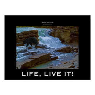 Black Bear Waterfall Wildlife Motivational Print