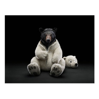 Black bear wearing polar bear costume postcard