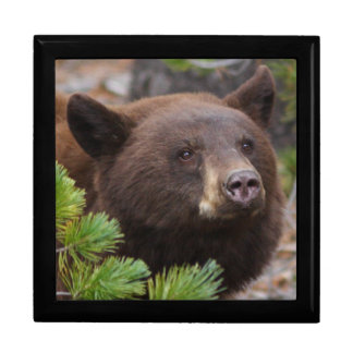 Black Bear with Blond Color Keepsake Boxes