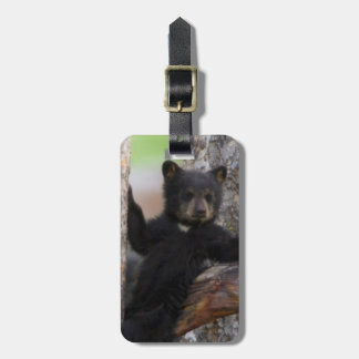 Black Bears Cub Lounging Luggage Tag