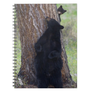 Black Bears, Sow and Cub Spiral Notebook