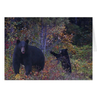 BLACK BEARS Wildlife Greeting Card