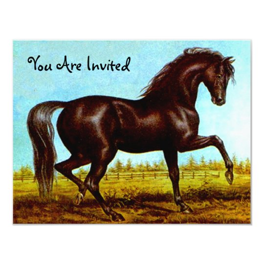 Black Beauty Horse Party Invitations Any Occasion