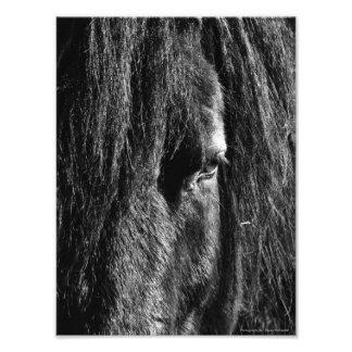 Black Beauty - Photo Enlargement