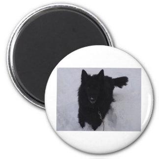 Black Belgian Shepherd in the Snow Fridge Magnet