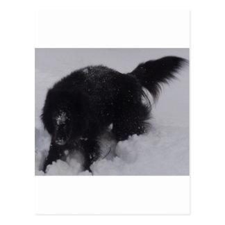 Black Belgian Shepherd in the Snow Post Card