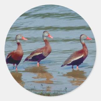 Black-Bellied Whistling Ducks Round Sticker