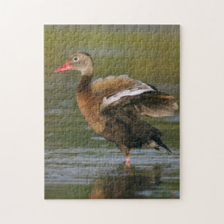 Black-belloied Whistling Duck Puzzle