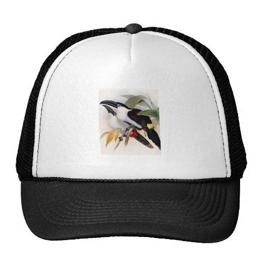 Black-billed Mountain Toucan Mesh Hat