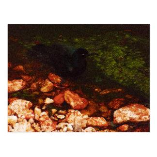 """Black Bird Bathing"" - Postcard"