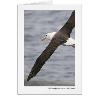 Black-browed Albatross in the Drake Passage Greeting Card