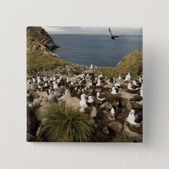 Black-browed Albatross, Thalassarche 15 Cm Square Badge