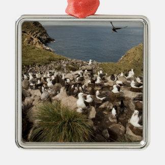 Black-browed Albatross, Thalassarche Christmas Ornament
