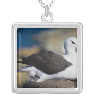 Black-browed Albatross Thalassarche Silver Plated Necklace