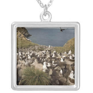 Black-browed Albatross, Thalassarche Silver Plated Necklace