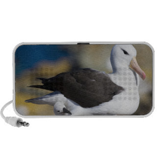 Black-browed Albatross Thalassarche Laptop Speaker