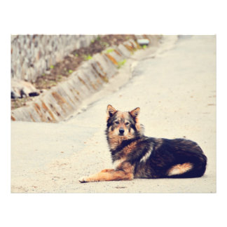 Black brown dog custom flyer