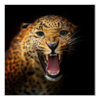 Black Brown Wild Leopard Poster