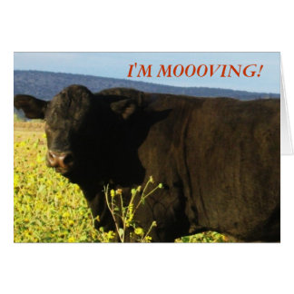 Black Bull in Flowers - Western Change of Address Card