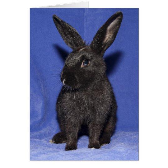 Black bunny rabbit card