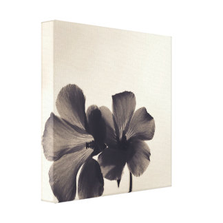 Black Buttercups Gallery Wrapped Canvas