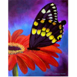 Black Butterfly Daisy Painting - Multi Cut Out