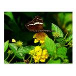 Black Butterfly on Yellow Lantana