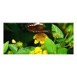 Black Butterfly on Yellow Lantana Customised Rack Card