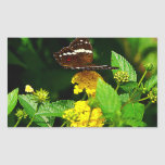 Black Butterfly on Yellow Lantana Rectangular Sticker