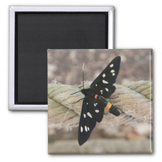black butterfly square magnet