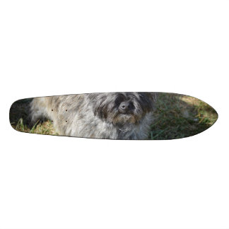 Black Cairn Terrier Skate Boards