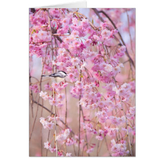 Black Cap Chickadee & Pink Weeping Willow Greeting Card