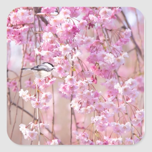 Black Cap Chickadee & Pink Weeping Willow Sticker