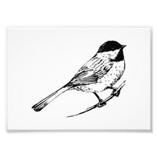 Black Capped Chickadee Art Photograph