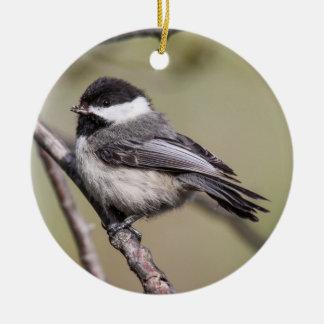 Black-capped Chickadee Christmas Ornament