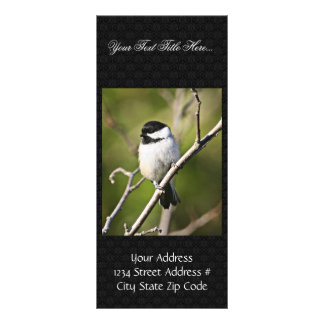 Black-capped chickadee full colour rack card