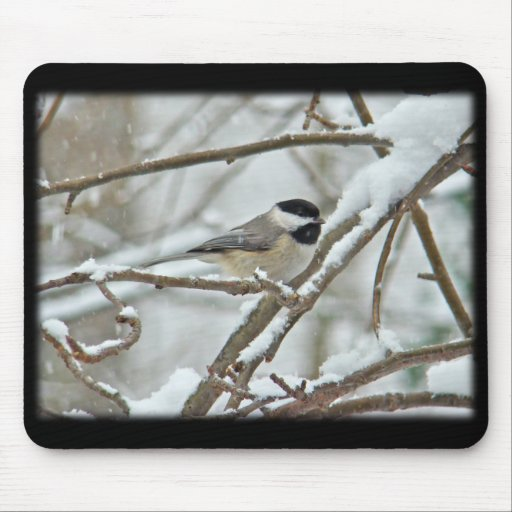 Black-Capped Chickadee in Snow Storm Mousepad