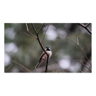 Black Capped Chickadee on Branch Pack Of Standard Business Cards