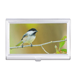 Black-Capped Chickadee Perched In Cottonwood Business Card Holder