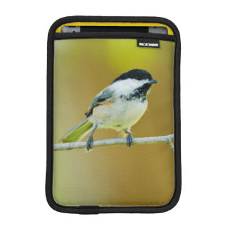 Black-Capped Chickadee Perched In Cottonwood iPad Mini Sleeve