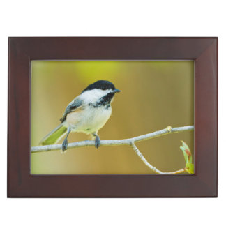 Black-Capped Chickadee Perched In Cottonwood Keepsake Box