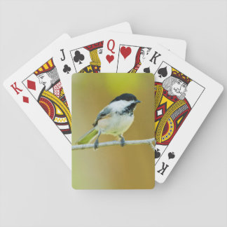 Black-Capped Chickadee Perched In Cottonwood Playing Cards