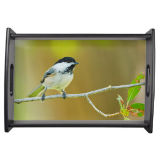 Black-Capped Chickadee Perched In Cottonwood Serving Tray