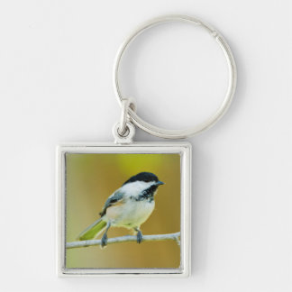 Black-Capped Chickadee Perched In Cottonwood Silver-Colored Square Key Ring