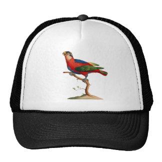 Black-capped Lory - Lorius lory Mesh Hat