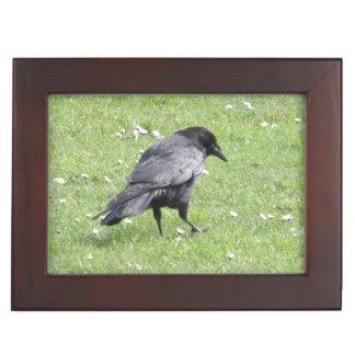 Black Carrion Crow Keepsake Box