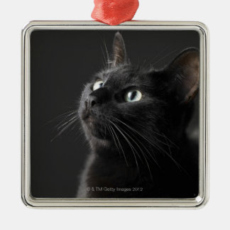 Black cat against black background, close-up christmas ornament