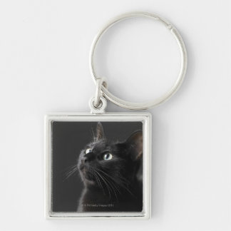 Black cat against black background, close-up key ring